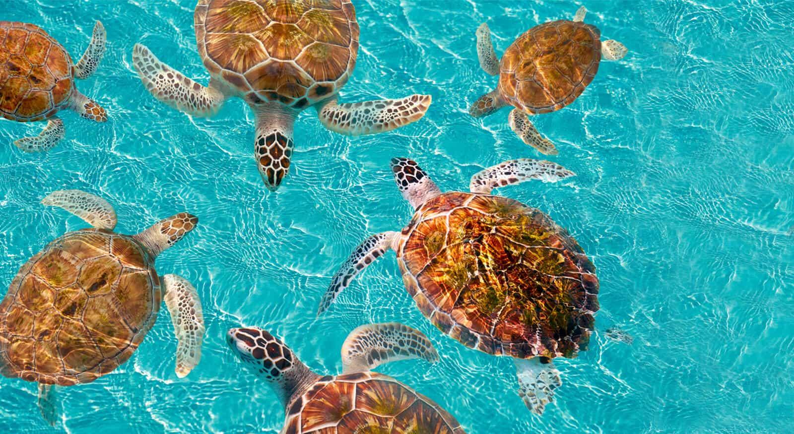 yucatan-fauna
