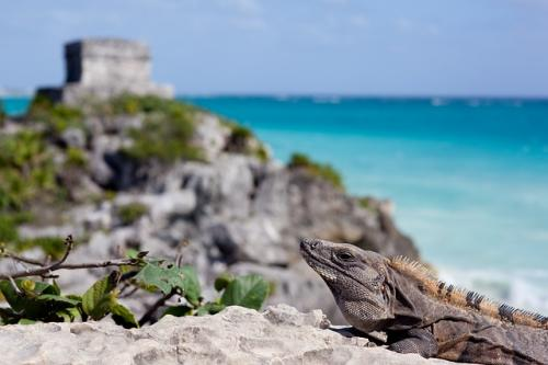 tulum-mexico-Cancun-animal